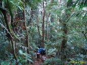 Descendo o Pico do Corcovado