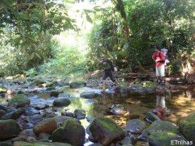 Riacho no meio da trilha