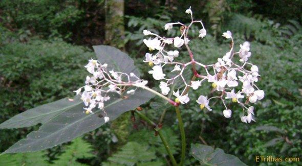 Turismo Sustentável orquídea