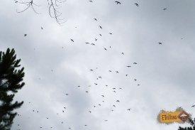 andorinhas-sobrevoando-gruta-das-andorinha-parque-da-barreira