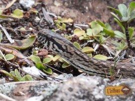 Cobra na Trilha Cachoeira da Aiuruoca - Parque Nacional do Itatiaia