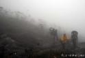 neblina_na_trilha_pico_da_neblina