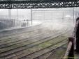 Ferrovia em meio a nebllina em Paranapiacaba - SP