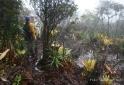 Bela vegetação na trilha do Pico da Neblina